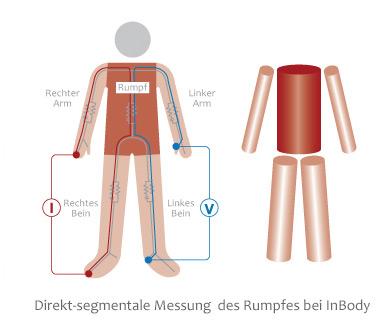 inbody_direkt-segmentale_messung__des_rumpfes